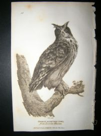 Shaw C1810 Antique Bird Print. Great Horned Owl